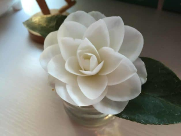 A white flower bloom in a vase on a table