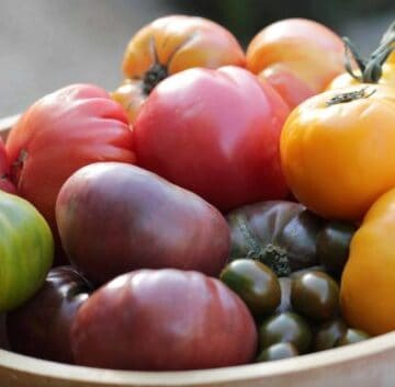 Beth's Homegrown Tomatoes