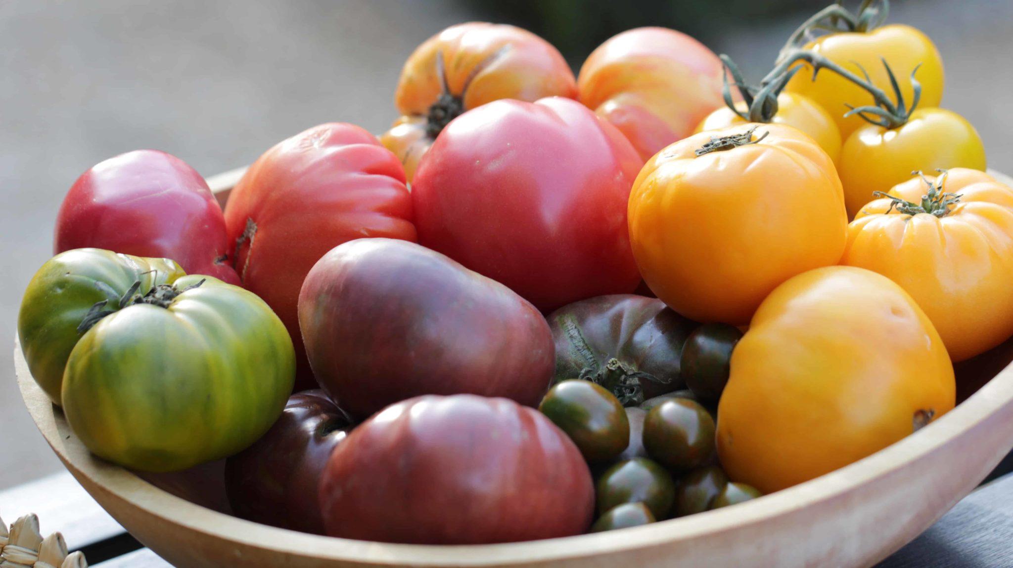 IBG07_Tomatoes_H1 copy