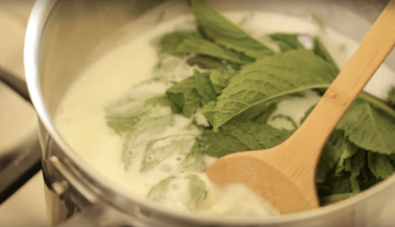fresh mint leaves submerged in ice cream mixture in a large pot for the best mint chocolate chip ice cream recipe