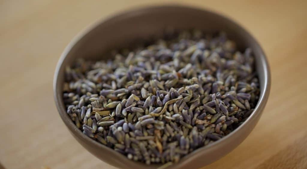 Culinary Lavender in a pinch pot
