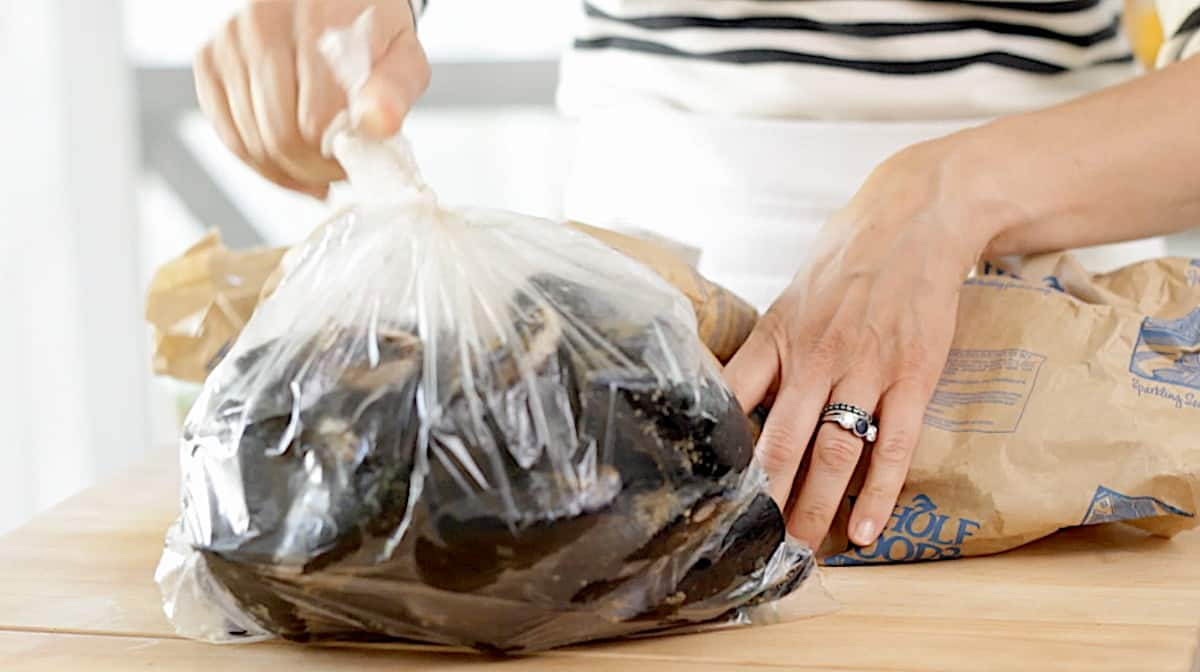 Fresh Mussels in a large plastic bag