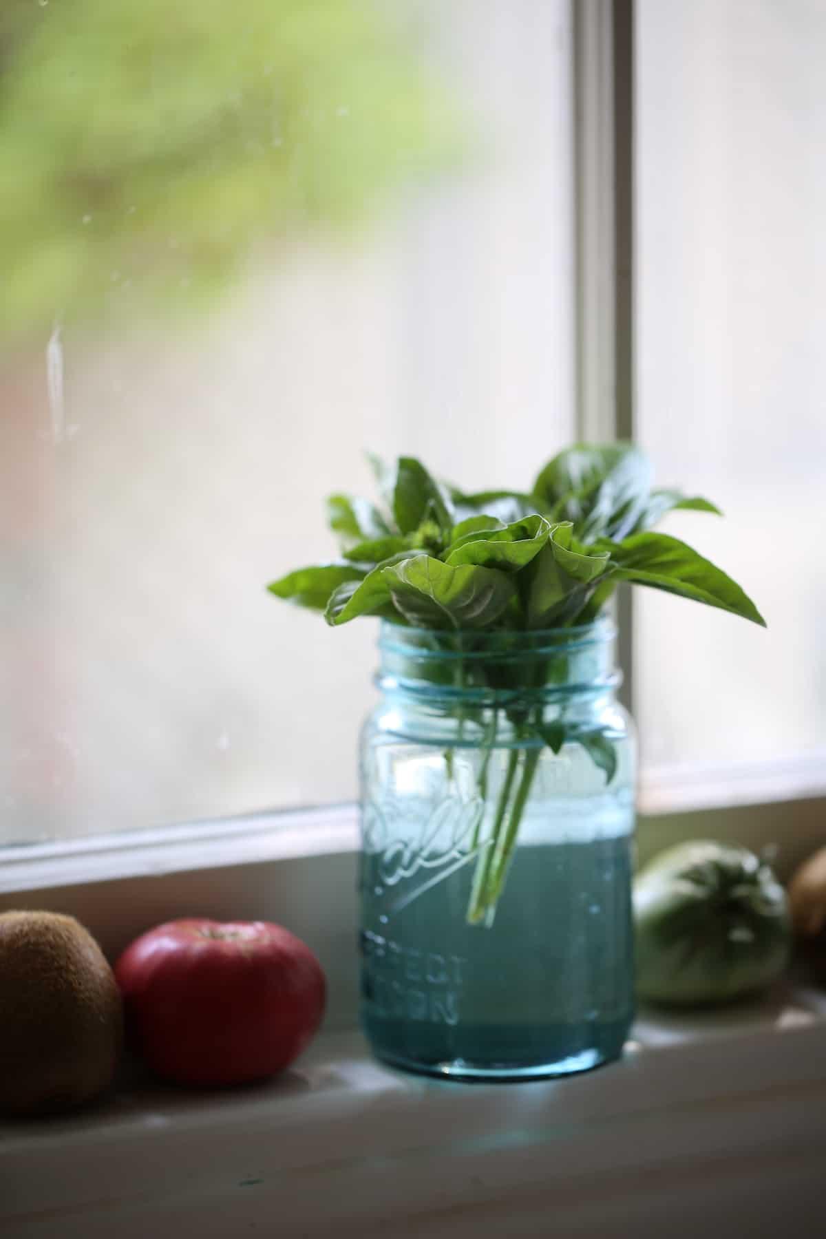 Fresh Basil in a mason jar