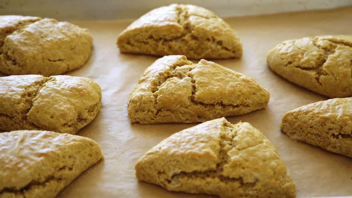 Scones freshly baked on a baking sheet without glaze